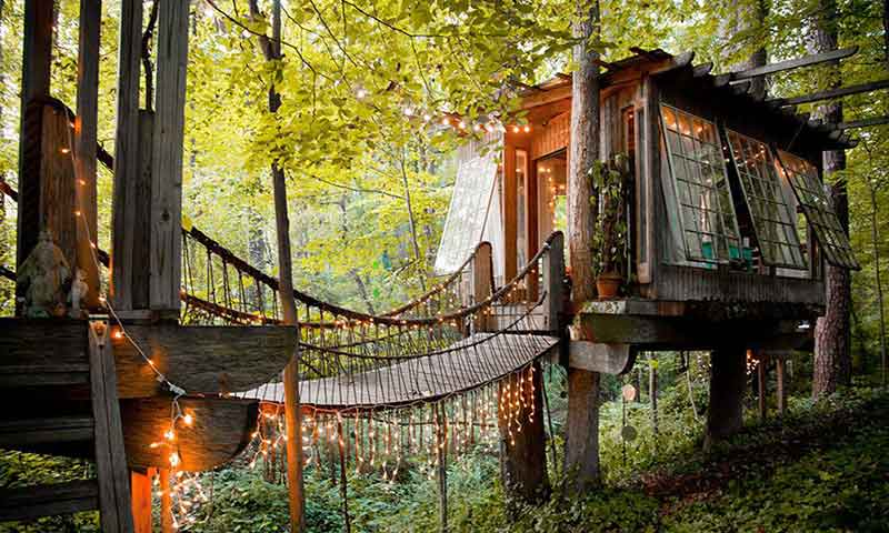 บ้านต้นไม้
