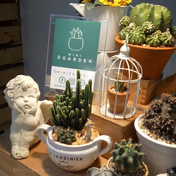 How to arrange a cactus garden